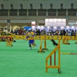 2008/12/20-21 JKC CUP & OPDESアジ