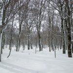 昨冬に続き玉原ブナ平スノーシュー
